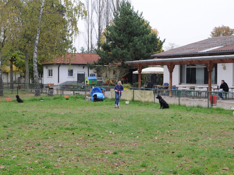 Junghundegruppe